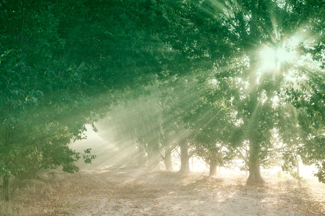 Trees with shafts of light