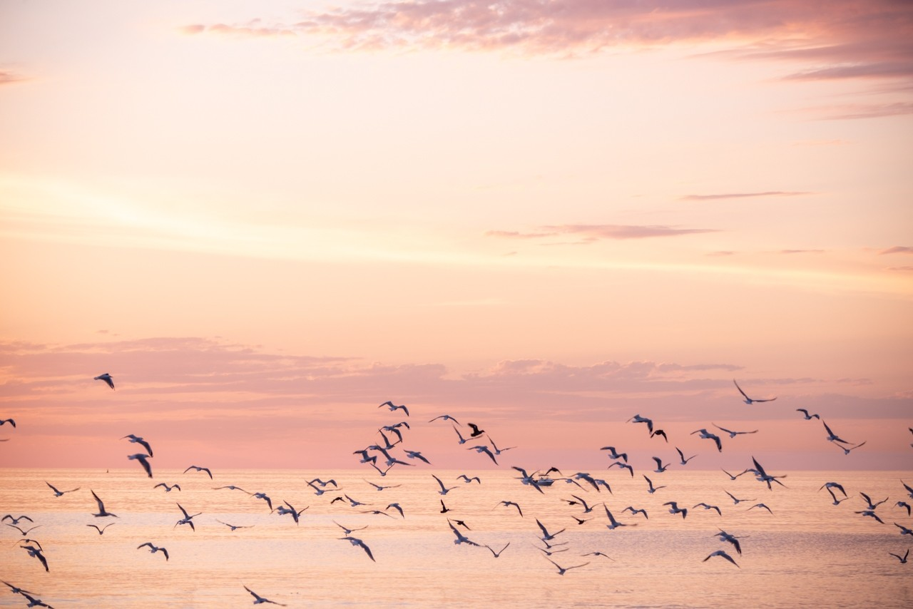 Flock of birds over at the ocean.