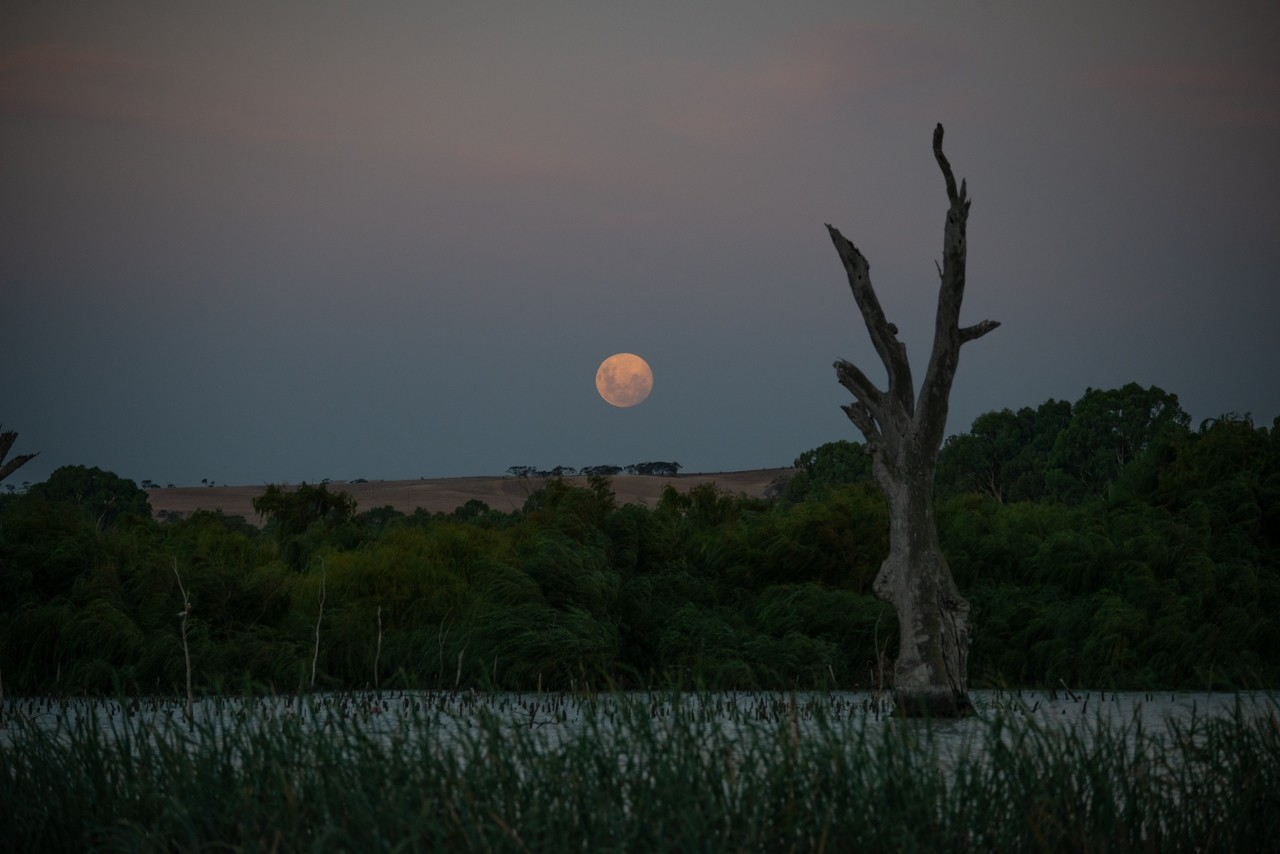 Moon rise over the Murray river