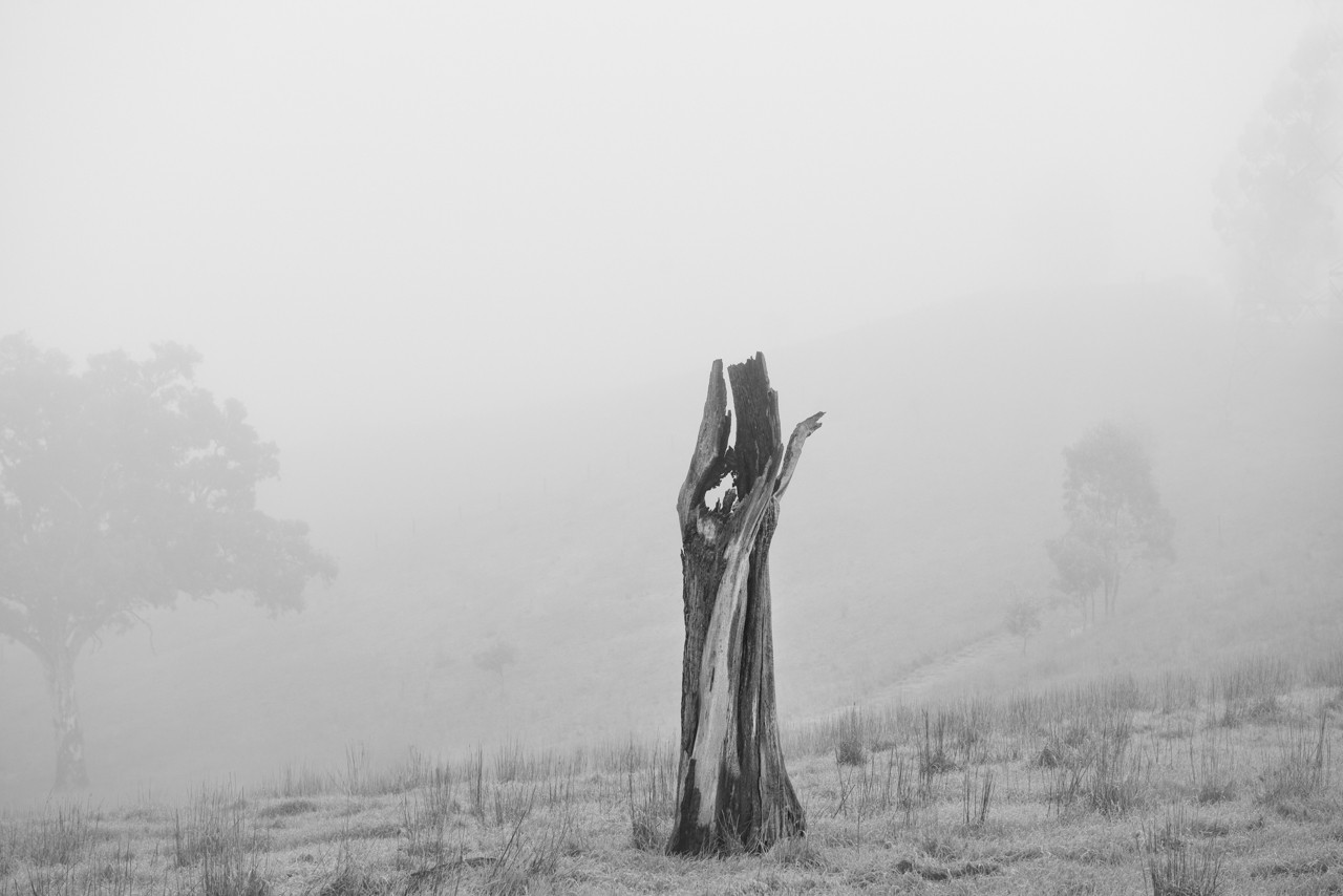 Black and white, fog in the Adelaide Hills